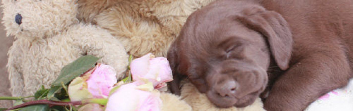 Phoebe 8 weeks